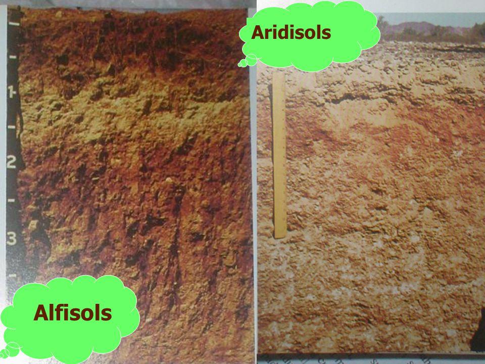 Aridisols Alfisols