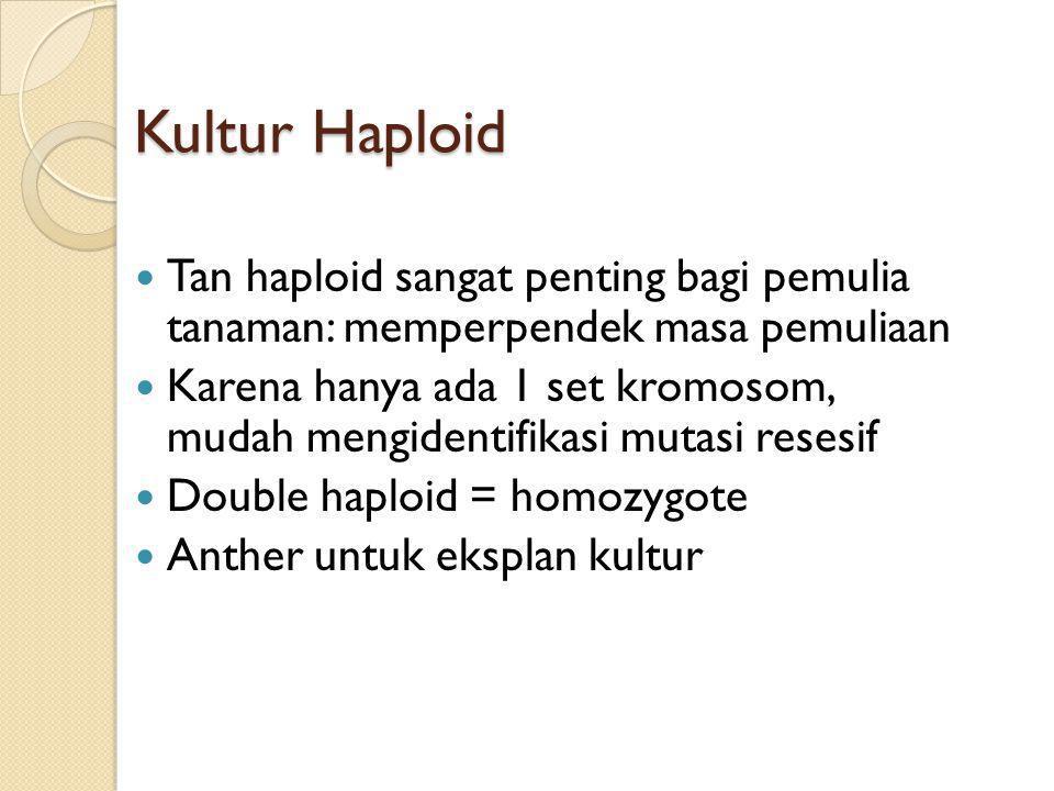 Kultur Haploid Tan haploid sangat penting bagi pemulia tanaman: memperpendek masa pemuliaan.