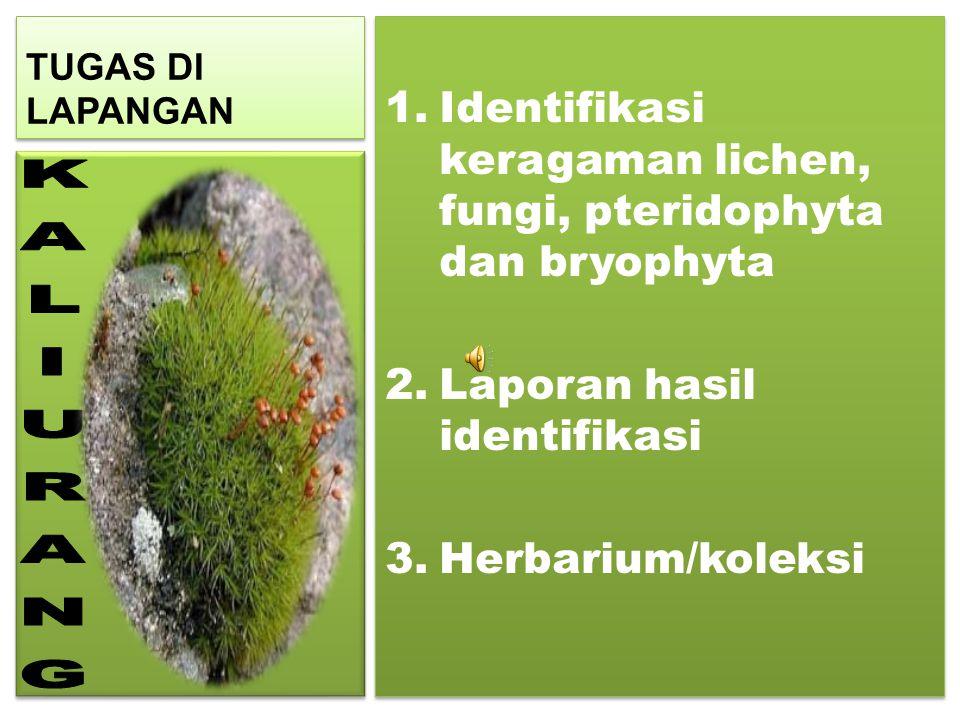 TUGAS DI LAPANGAN Identifikasi keragaman lichen, fungi, pteridophyta dan bryophyta. Laporan hasil identifikasi.