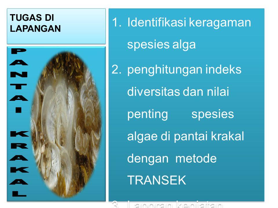 PANTAI KRAKAL Identifikasi keragaman spesies alga