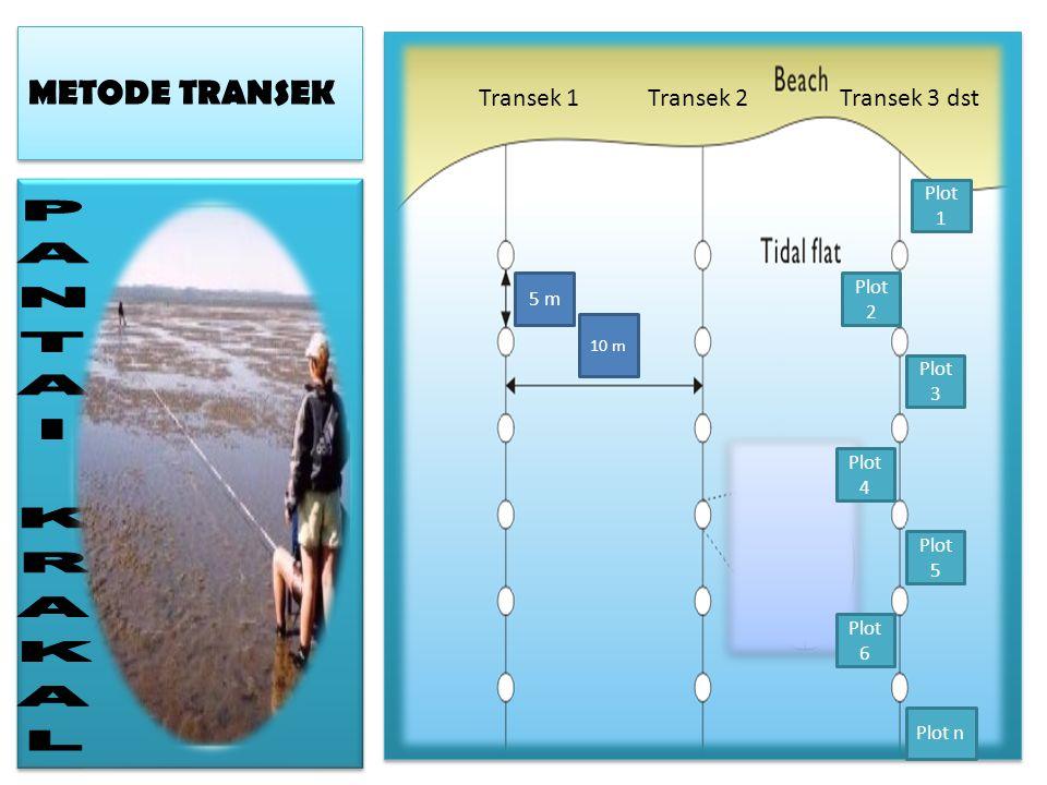 PANTAI KRAKAL METODE TRANSEK Transek 1 Transek 2 Transek 3 dst Plot 1