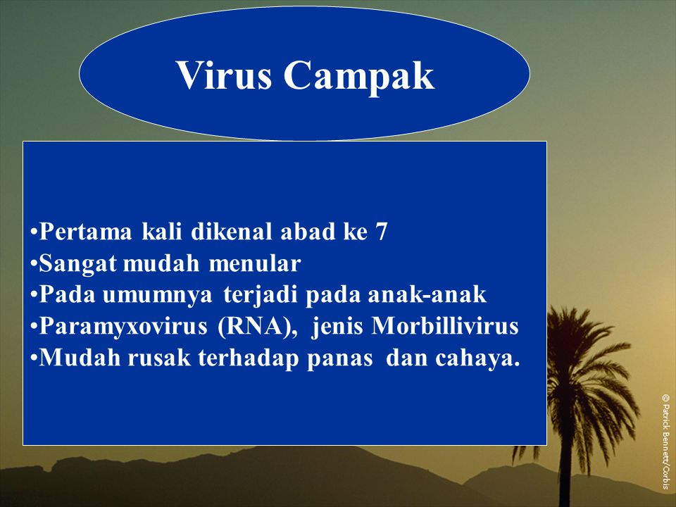 Virus Campak Pertama kali dikenal abad ke 7 Sangat mudah menular