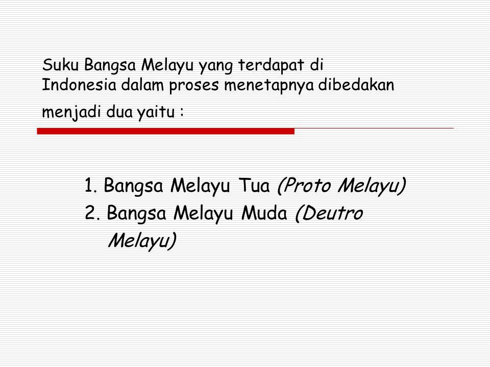 1. Bangsa Melayu Tua (Proto Melayu) 2. Bangsa Melayu Muda (Deutro