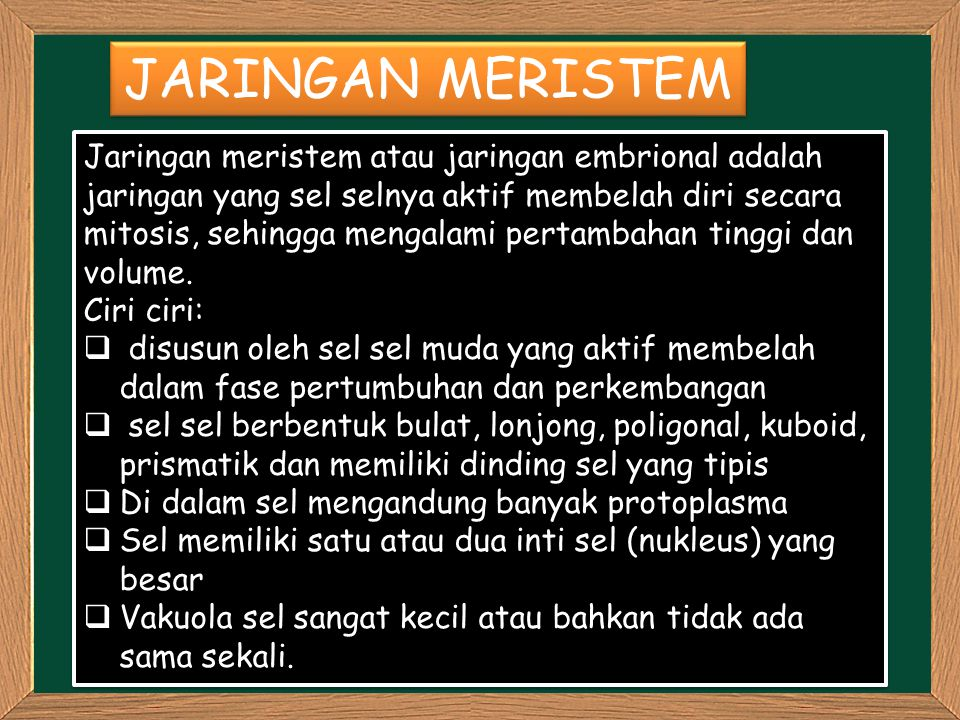 JARINGAN MERISTEM