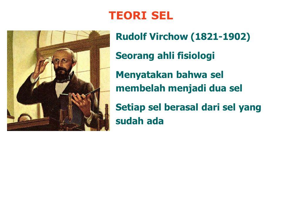 TEORI SEL Rudolf Virchow (1821-1902) Seorang ahli fisiologi