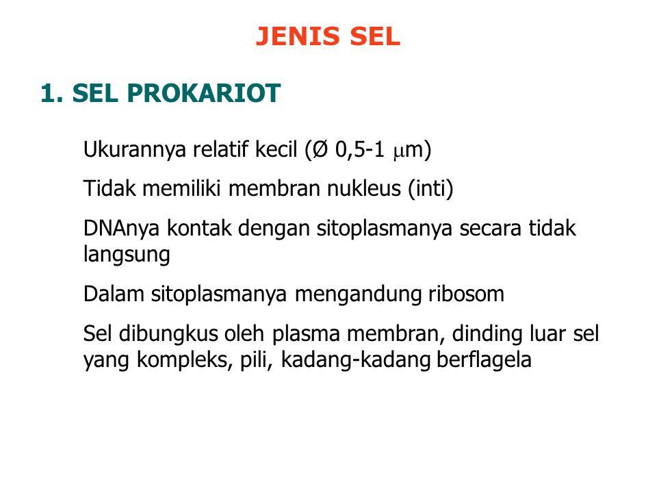 JENIS SEL SEL PROKARIOT Ukurannya relatif kecil (Ø 0,5-1 m)