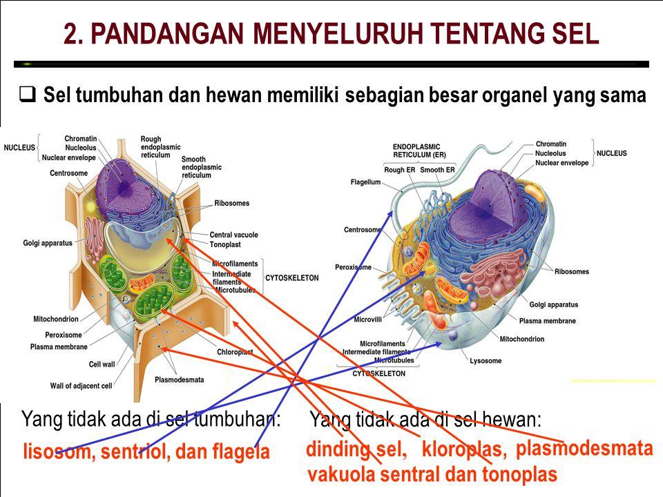 2. PANDANGAN MENYELURUH TENTANG SEL