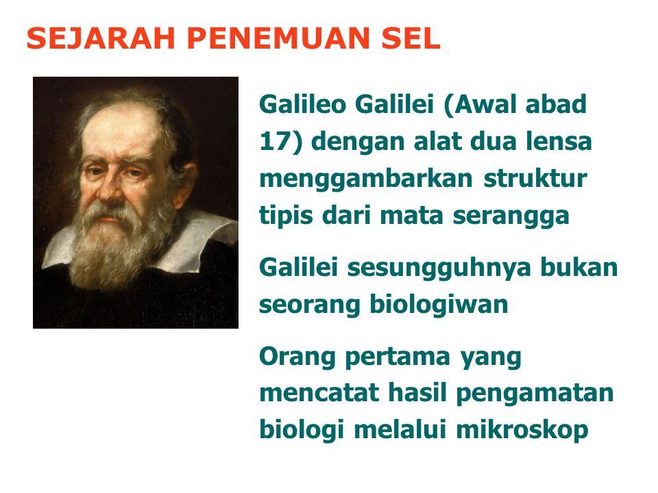 SEJARAH PENEMUAN SEL Galileo Galilei (Awal abad 17) dengan alat dua lensa menggambarkan struktur tipis dari mata serangga.