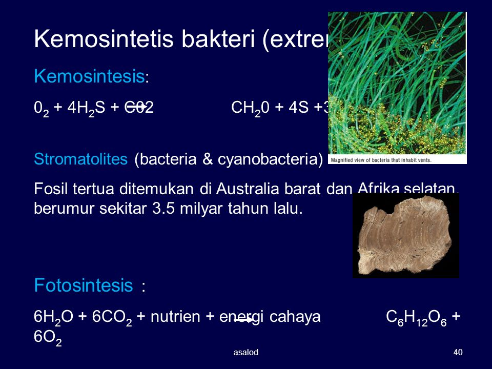 Kemosintetis bakteri (extremophiles)