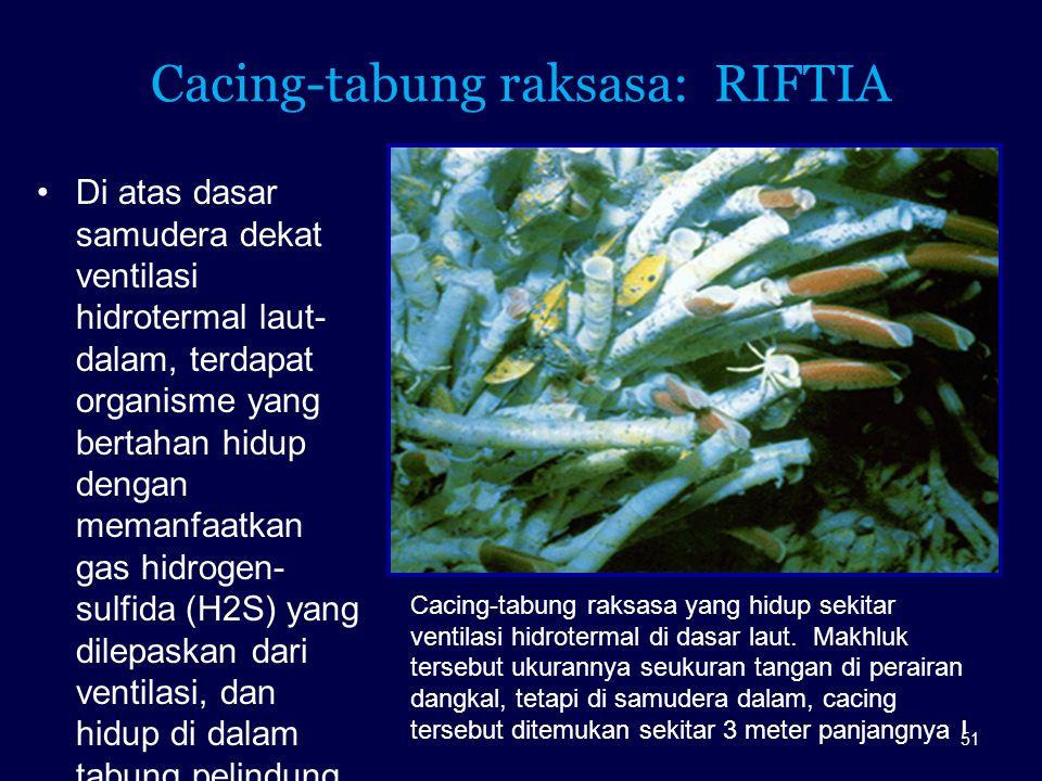 Cacing-tabung raksasa: RIFTIA
