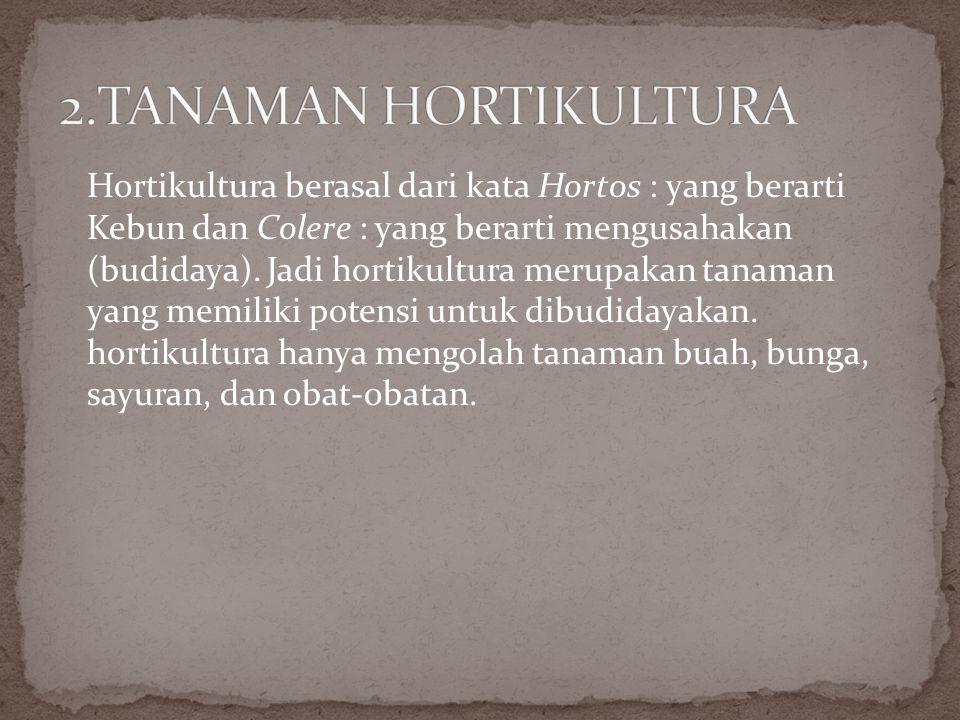 2.TANAMAN HORTIKULTURA