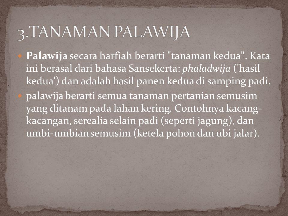 3.TANAMAN PALAWIJA