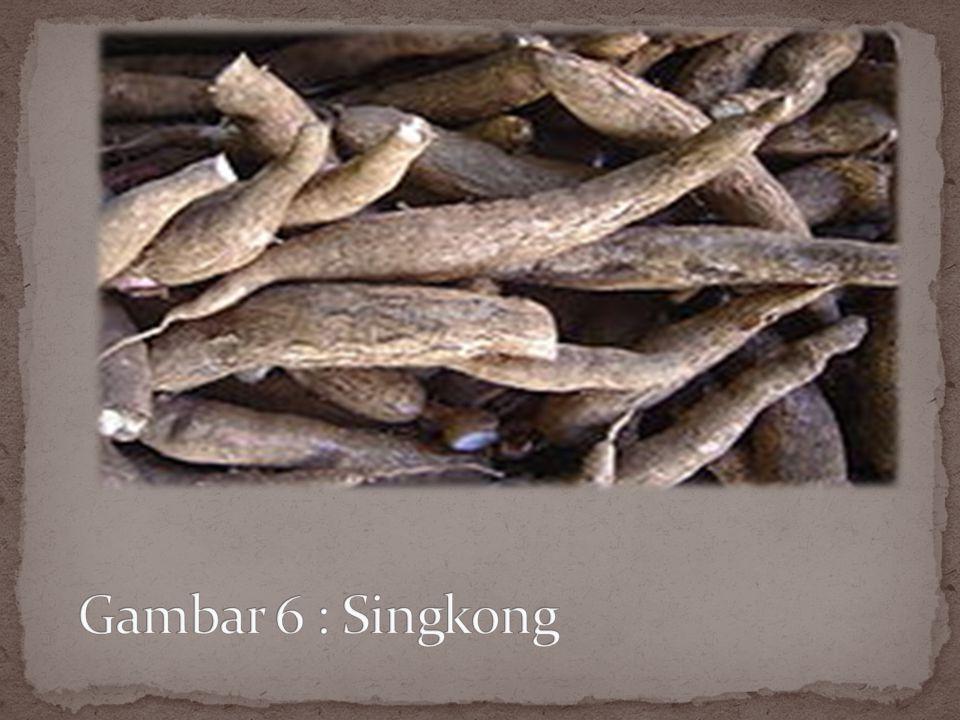 Gambar 6 : Singkong