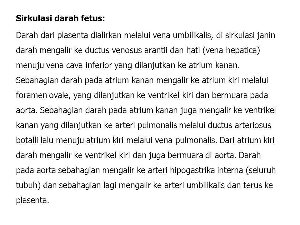 Sirkulasi darah fetus:
