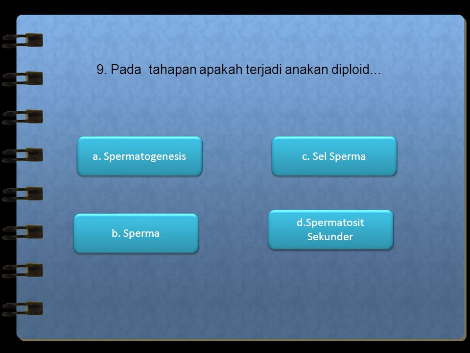 d.Spermatosit Sekunder