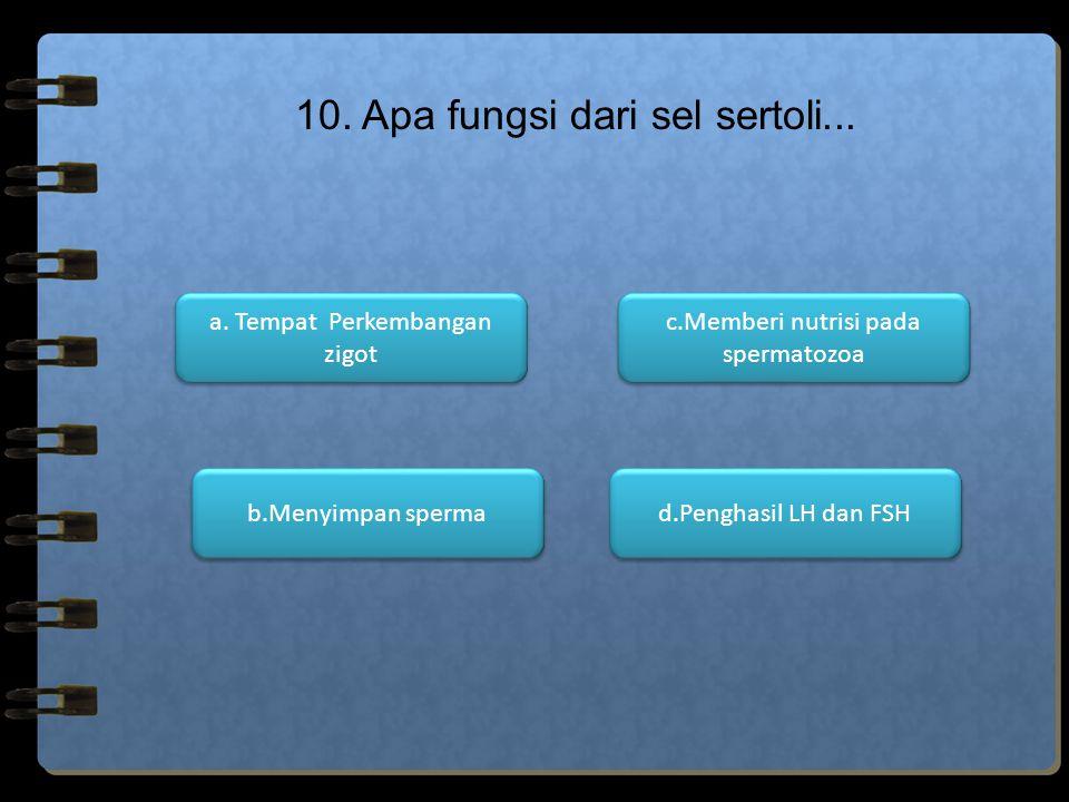 10. Apa fungsi dari sel sertoli...