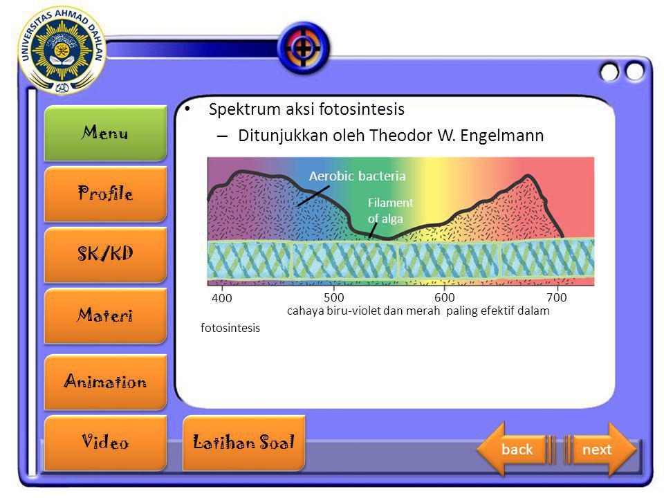 Spektrum aksi fotosintesis Ditunjukkan oleh Theodor W. Engelmann