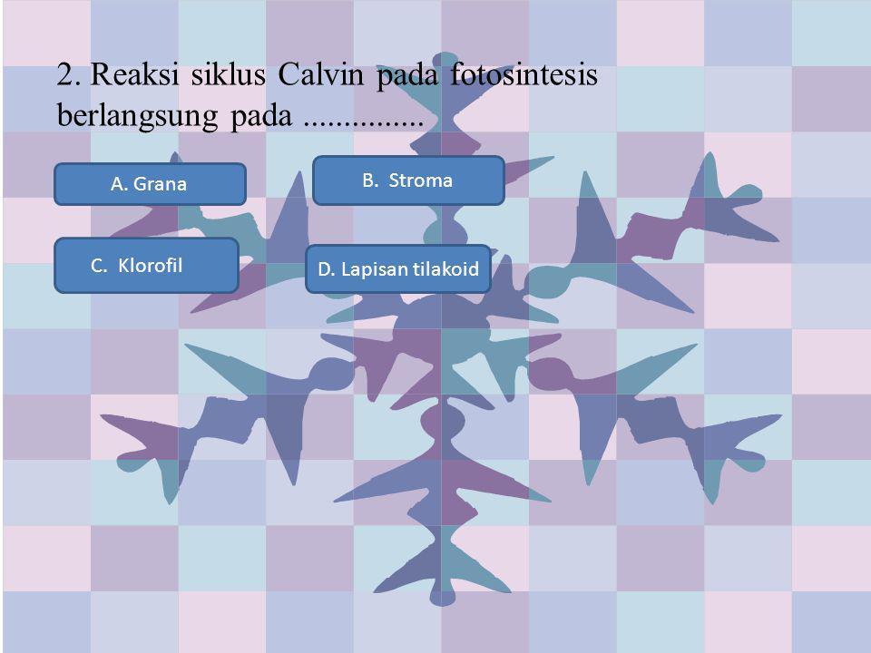 2. Reaksi siklus Calvin pada fotosintesis berlangsung pada ...............