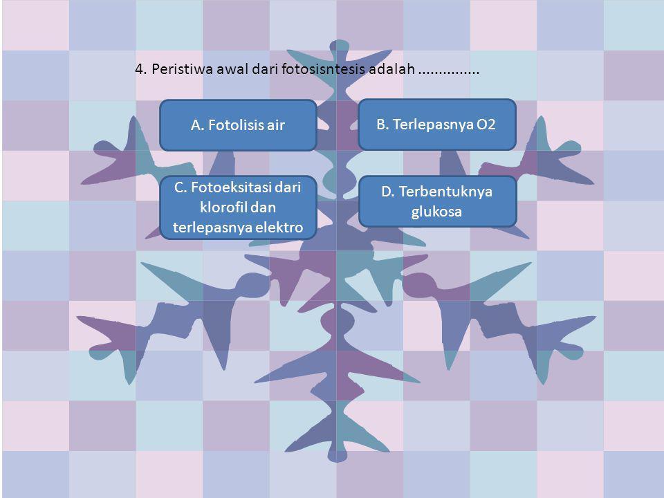 4. Peristiwa awal dari fotosisntesis adalah ...............