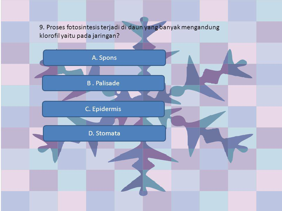 9. Proses fotosintesis terjadi di daun yang banyak mengandung klorofil yaitu pada jaringan