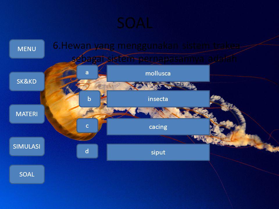 SOAL 6.Hewan yang menggunakan sistem trakea sebagai sistem pernapasannya adalah. MENU. a. mollusca.