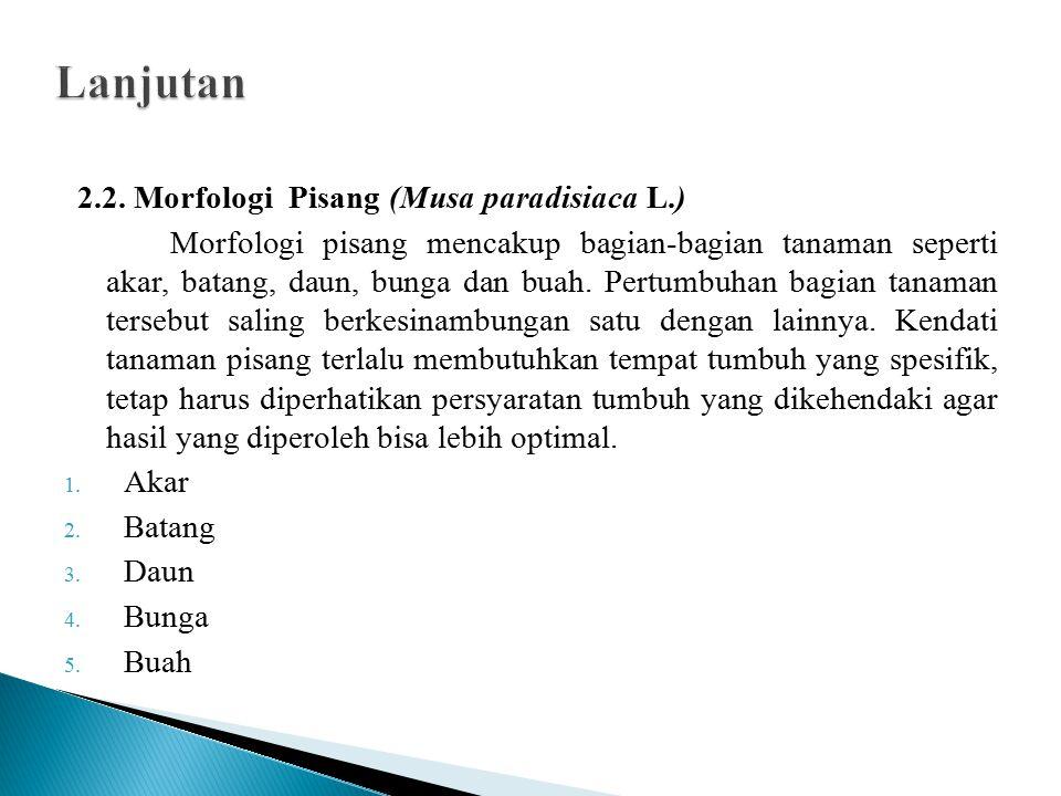 Lanjutan 2.2. Morfologi Pisang (Musa paradisiaca L.)