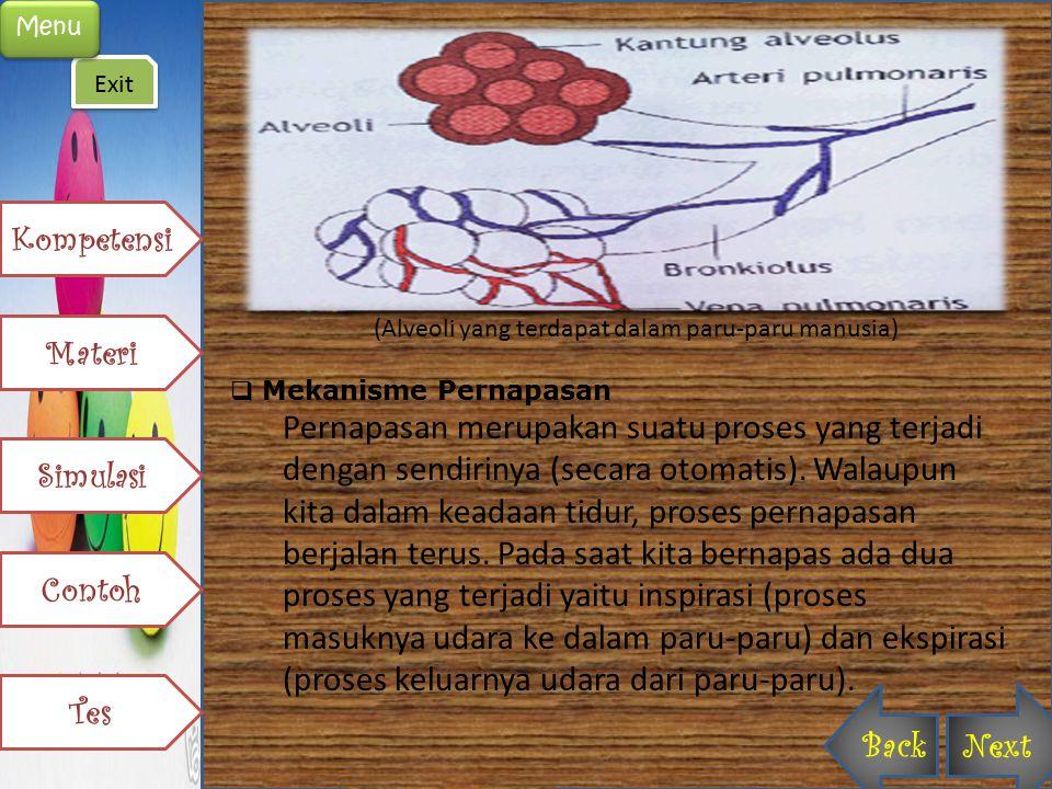 (Alveoli yang terdapat dalam paru-paru manusia)