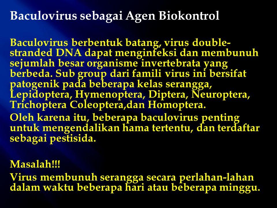 Baculovirus sebagai Agen Biokontrol