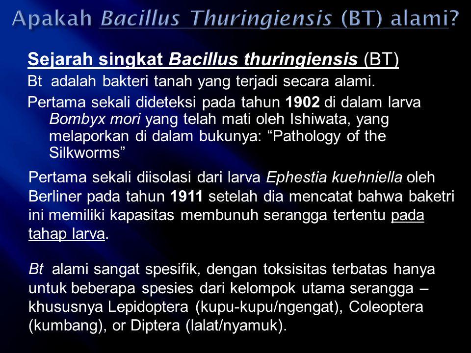 Apakah Bacillus Thuringiensis (BT) alami