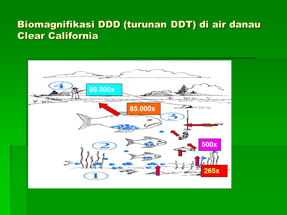 Biomagnifikasi DDD (turunan DDT) di air danau Clear California