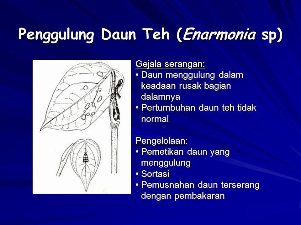Penggulung Daun Teh (Enarmonia sp)