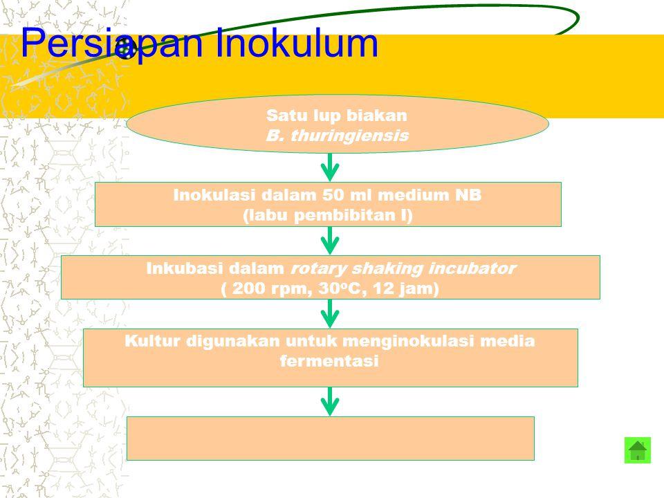 Persiapan Inokulum Satu lup biakan B. thuringiensis