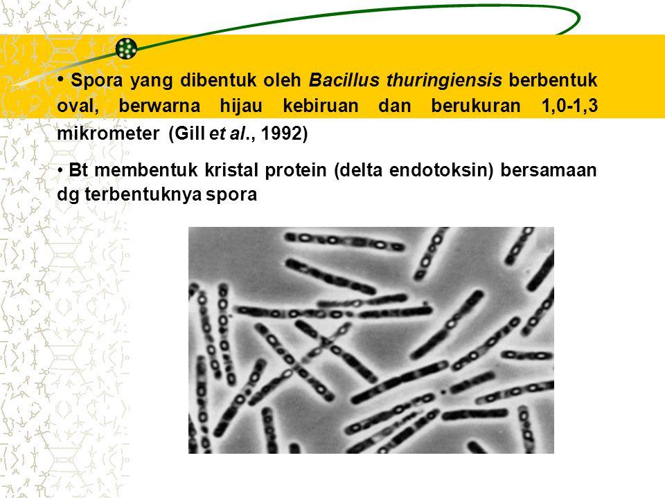 Spora yang dibentuk oleh Bacillus thuringiensis berbentuk oval, berwarna hijau kebiruan dan berukuran 1,0-1,3 mikrometer (Gill et al., 1992)