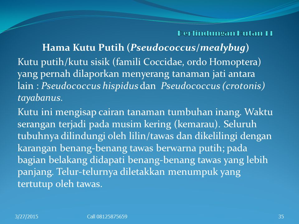 Hama Kutu Putih (Pseudococcus/mealybug)