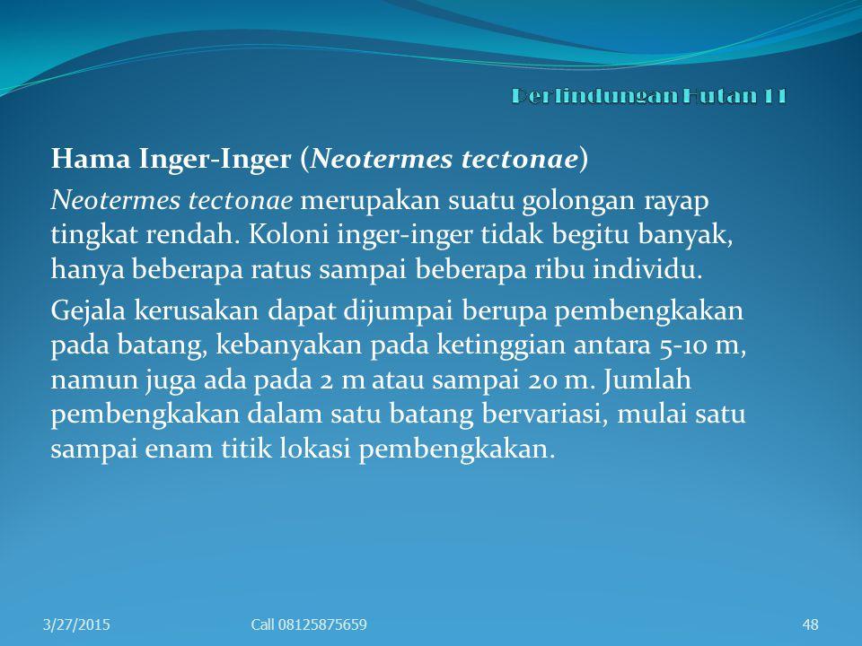 Hama Inger-Inger (Neotermes tectonae)