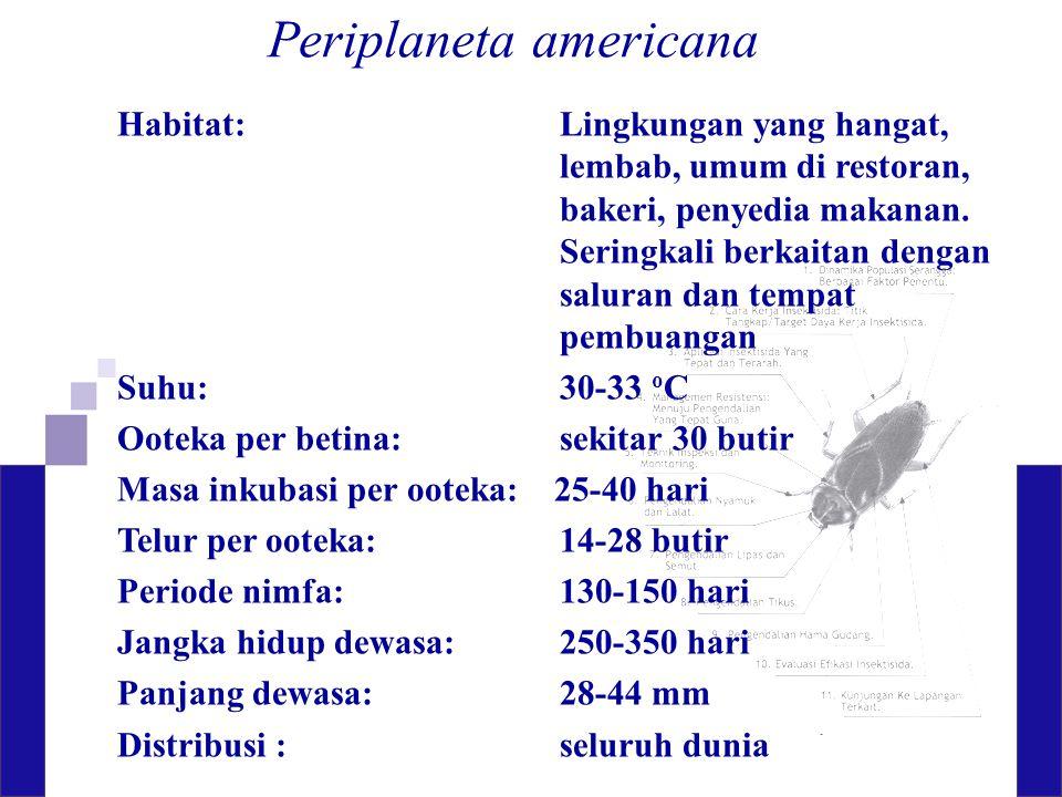 Periplaneta americana