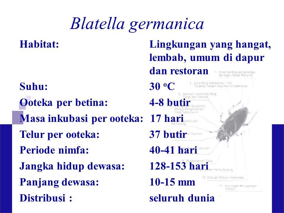 Blatella germanica Habitat: Lingkungan yang hangat, lembab, umum di dapur dan restoran. Suhu: 30 oC.