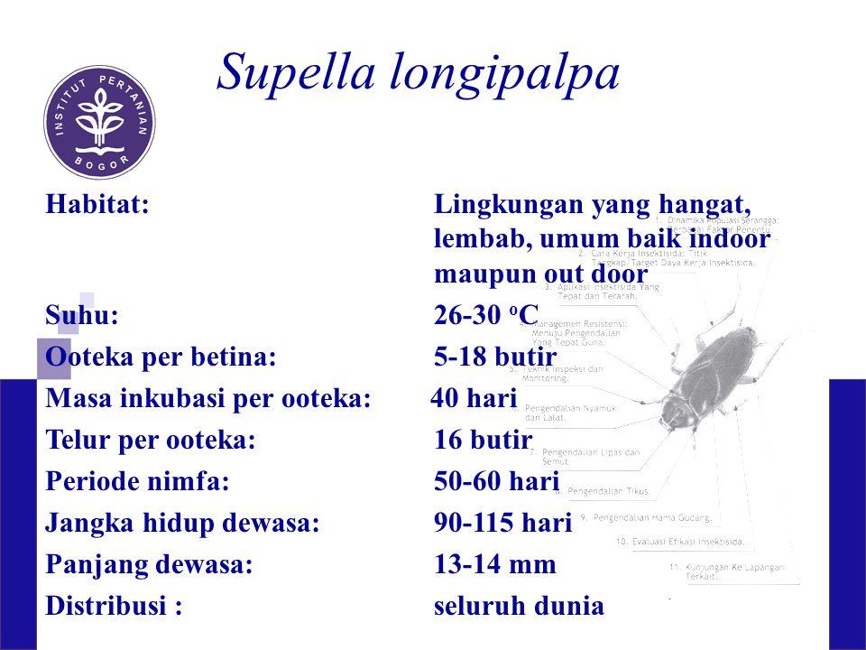 Supella longipalpa Habitat: Lingkungan yang hangat, lembab, umum baik indoor maupun out door. Suhu: 26-30 oC.