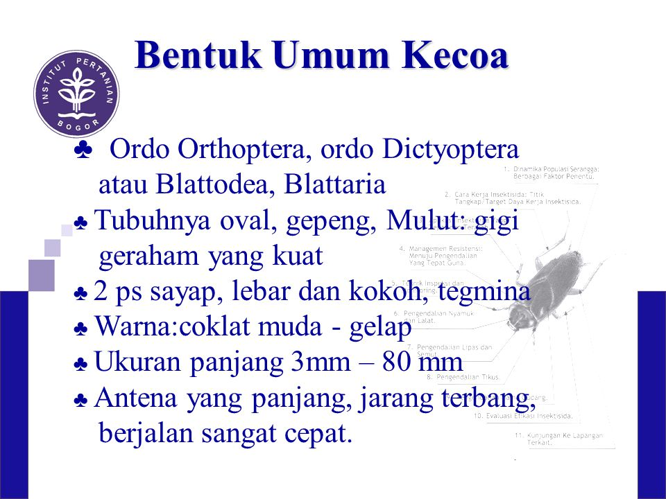 Bentuk Umum Kecoa ♣ Ordo Orthoptera, ordo Dictyoptera