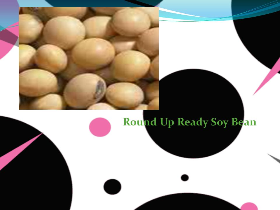Round Up Ready Soy Bean