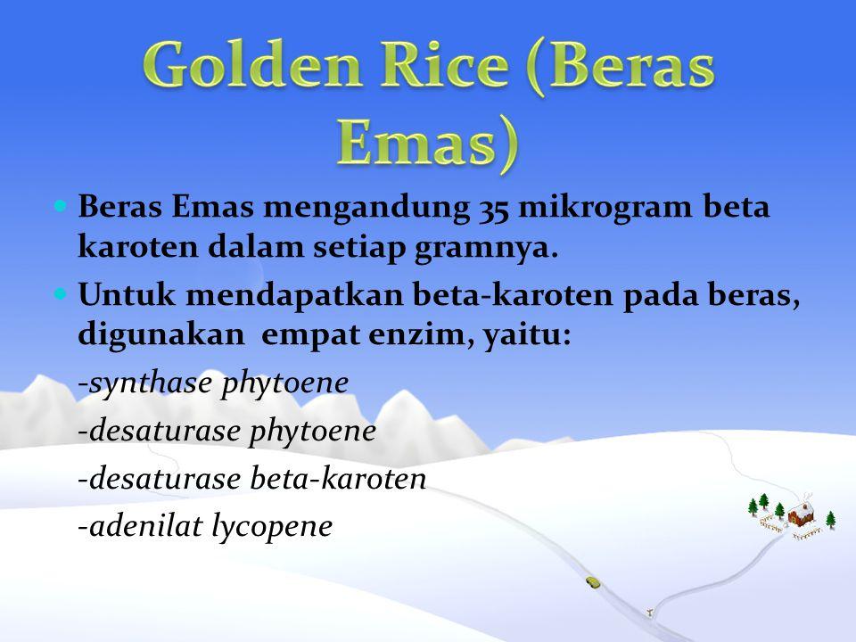 Golden Rice (Beras Emas)