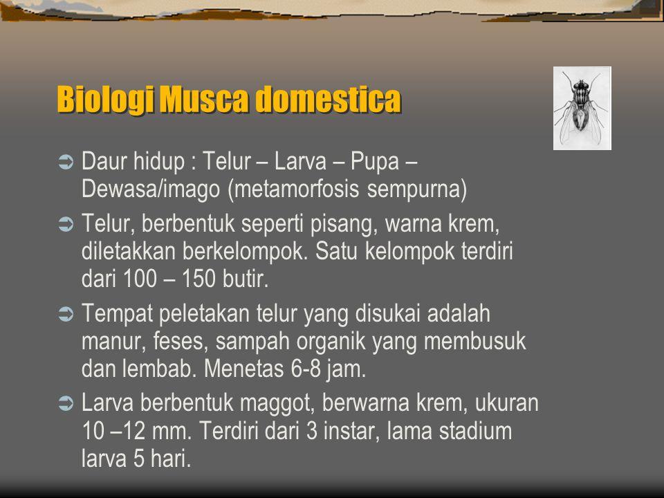 Biologi Musca domestica