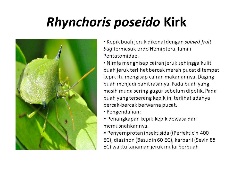 Rhynchoris poseido Kirk