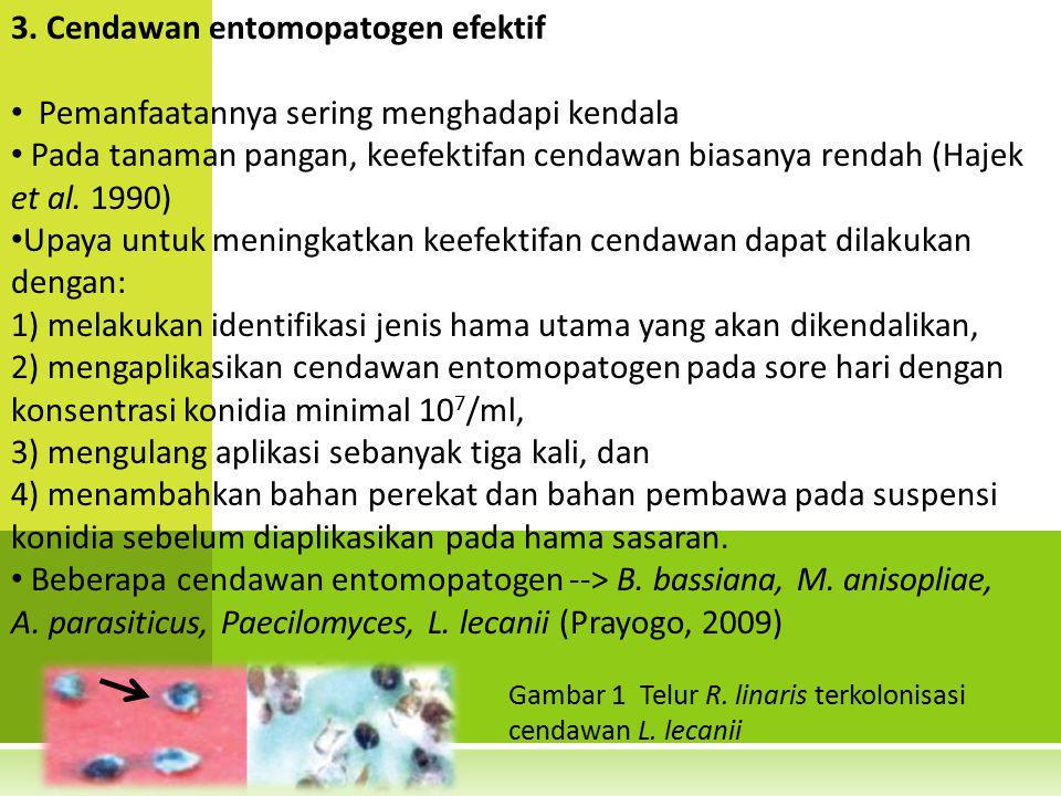 3. Cendawan entomopatogen efektif