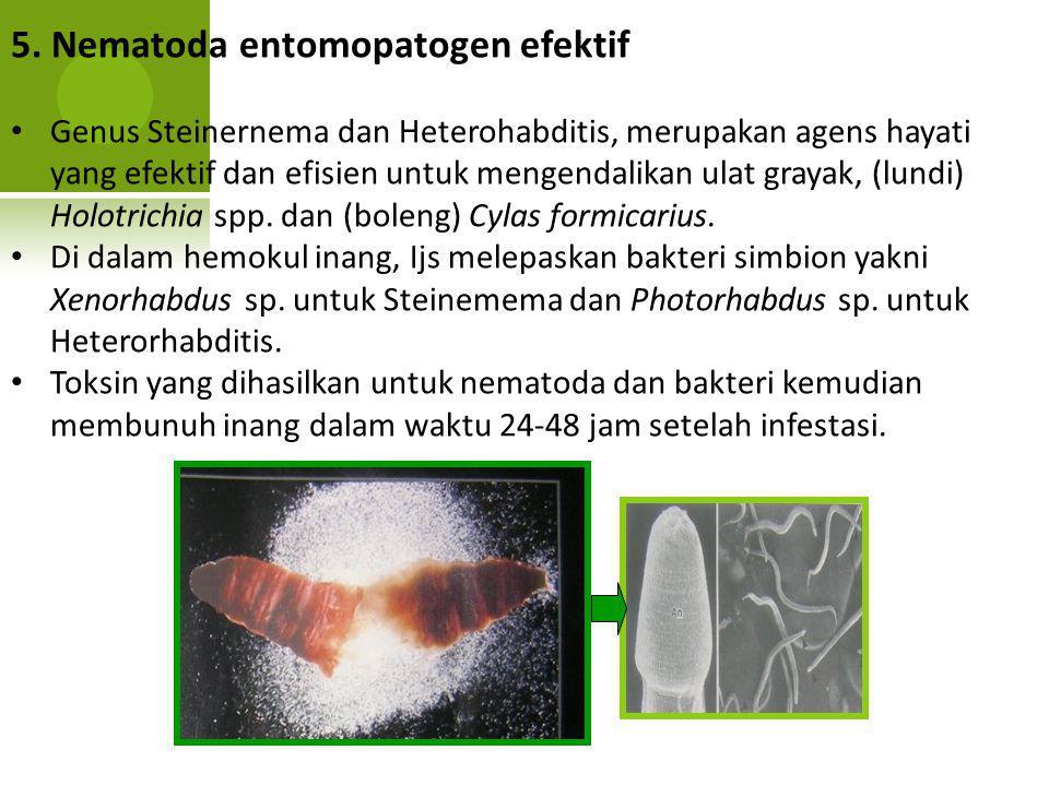 5. Nematoda entomopatogen efektif