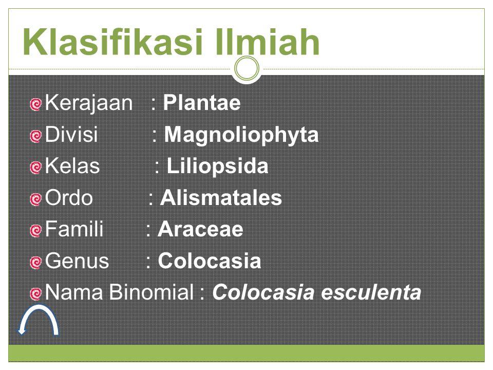 Klasifikasi Ilmiah Kerajaan : Plantae Divisi : Magnoliophyta