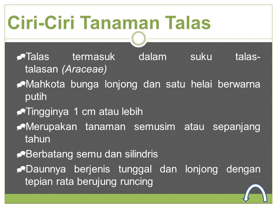 Ciri-Ciri Tanaman Talas