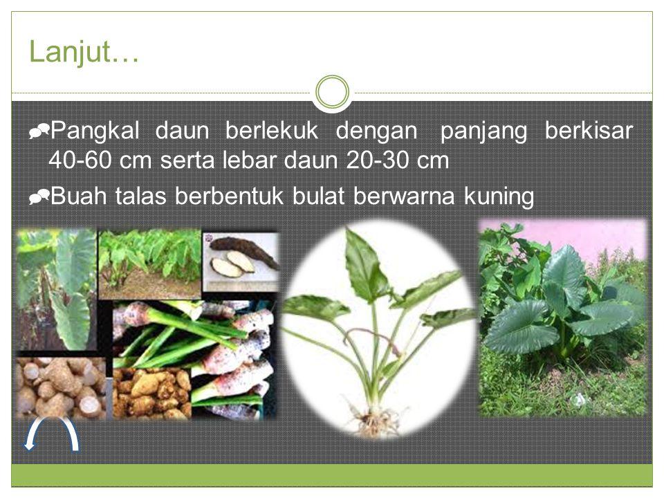 Lanjut… Pangkal daun berlekuk dengan panjang berkisar 40-60 cm serta lebar daun 20-30 cm.