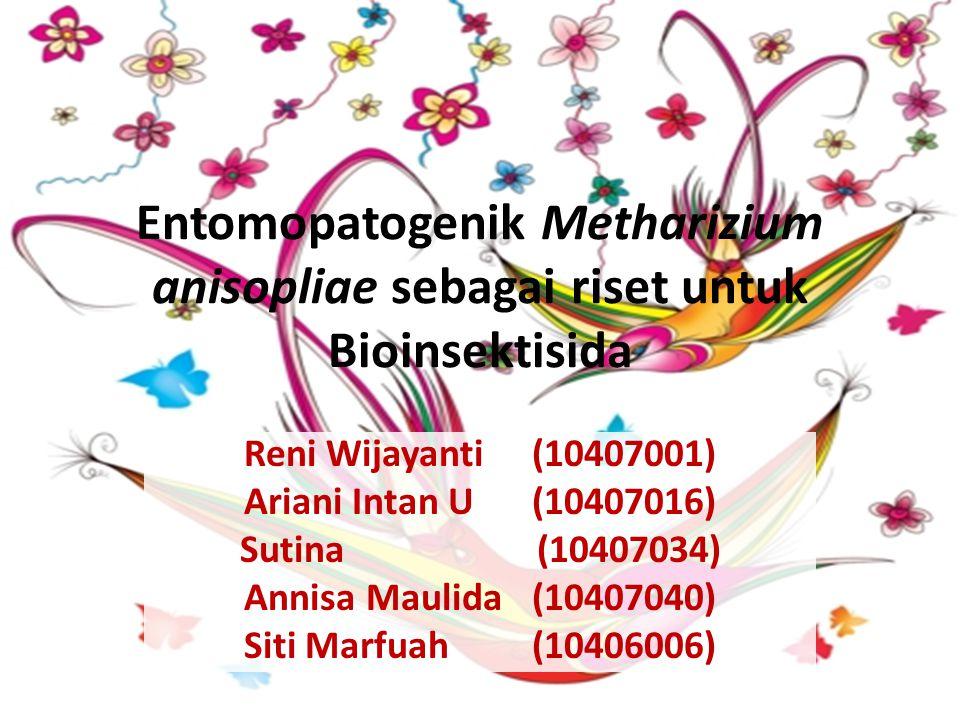 Entomopatogenik Metharizium anisopliae sebagai riset untuk Bioinsektisida
