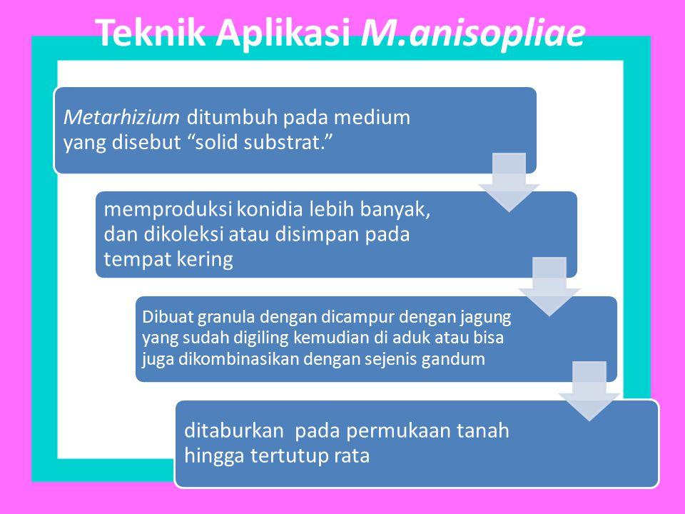 Teknik Aplikasi M.anisopliae
